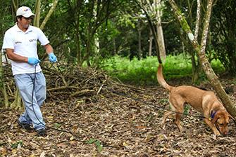 un perro de detección en galápagos (foto © rebecca ross)