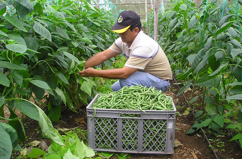 una granja sostenible en galÁpagos (foto © galapagos conservancy)