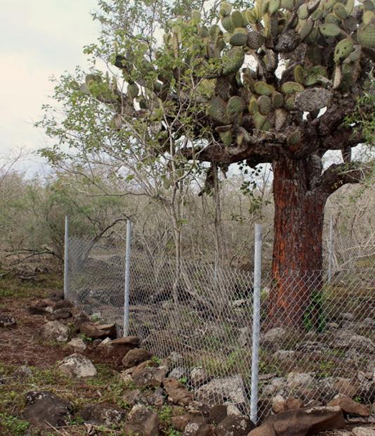 una parcela permanente en la isla  Española (foto © james gibbs)