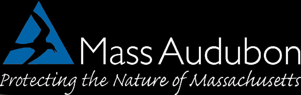 mass aud.jpg
