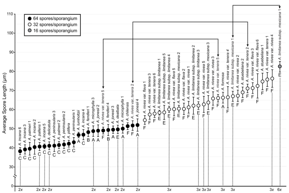 Average spore lengths for specimens of  Argyrochosma ; error bars indicate one standard deviation. Symbol shading depicts the number of spores per sporangium (see inset legend). Lines beginning and ending in arrows indicate specimens observed to have two sporangia types, each with a different number of spores per sporangium.  The letter below each data point corresponds to a major monophyletic clade within  Argyrochosma . Sporophyte ploidy is indicated for documented chromosome count vouchers. Image from Sigel et al. 2011,  Systematic Botany.
