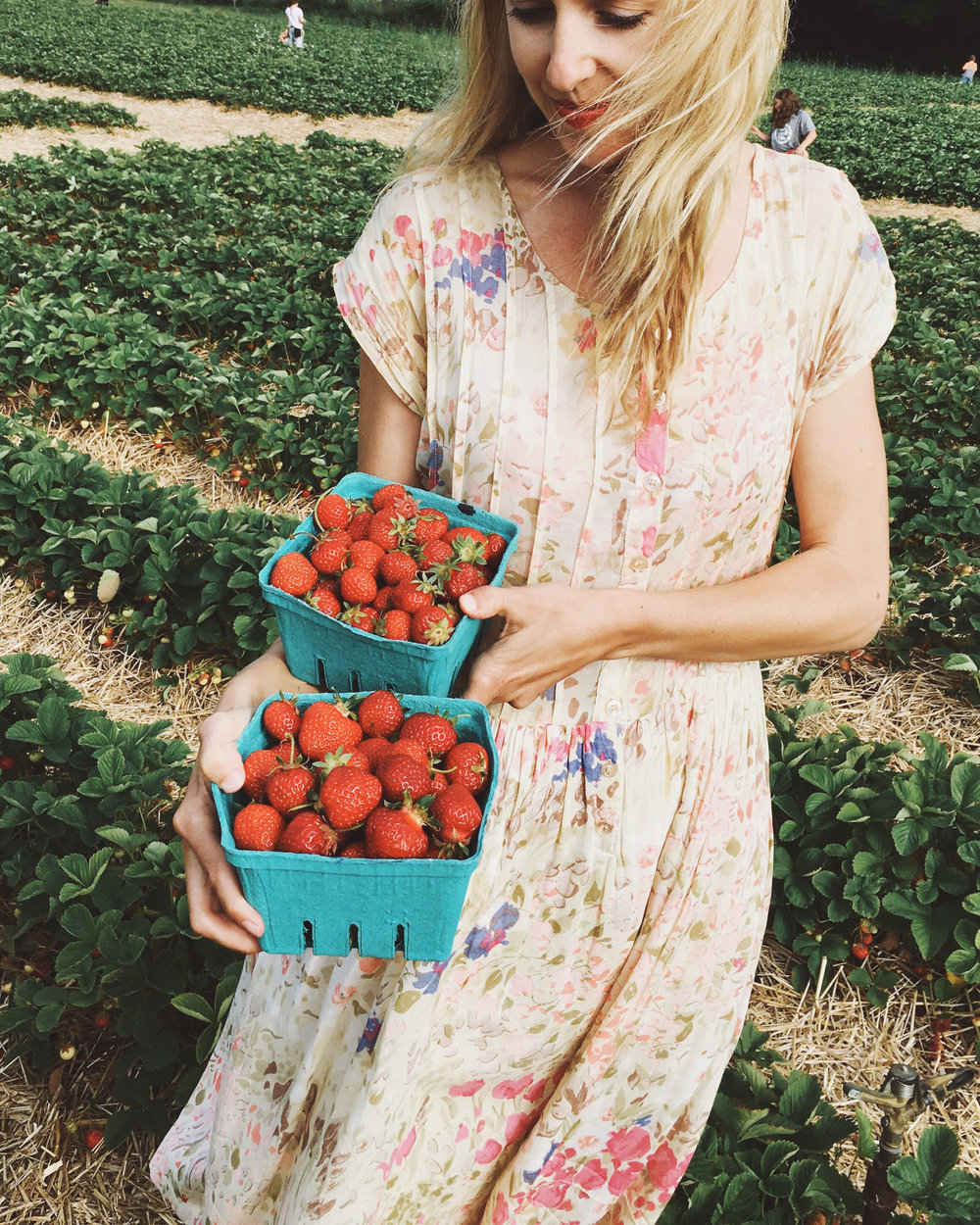 My friend Keiko and I traveled through Maine by car earlier this year. We stopped to pick strawberries which made for a lovely little treat once we finally arrived at our destination.