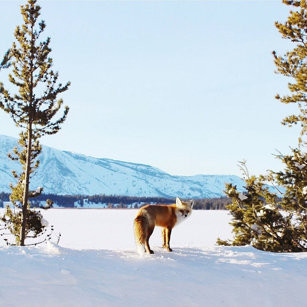Jenny Lake | Grand Tetons