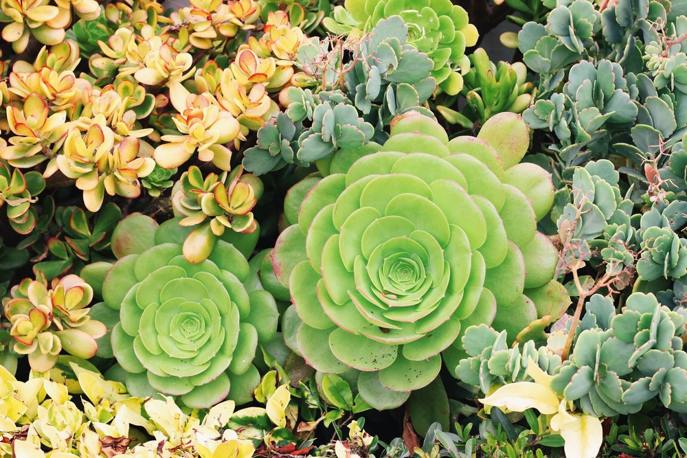 clean living, weekend detox, succulents at home