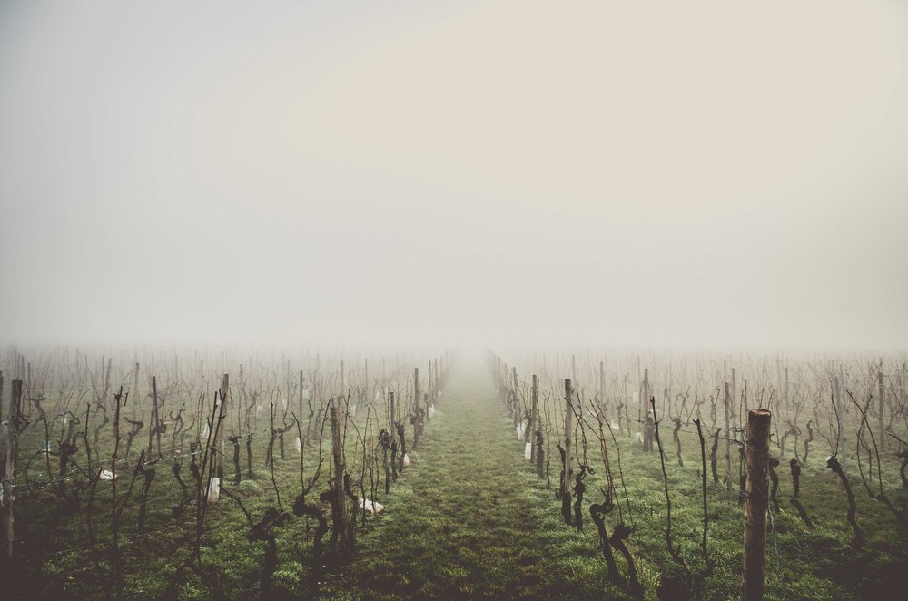 Napa Valley, Winter