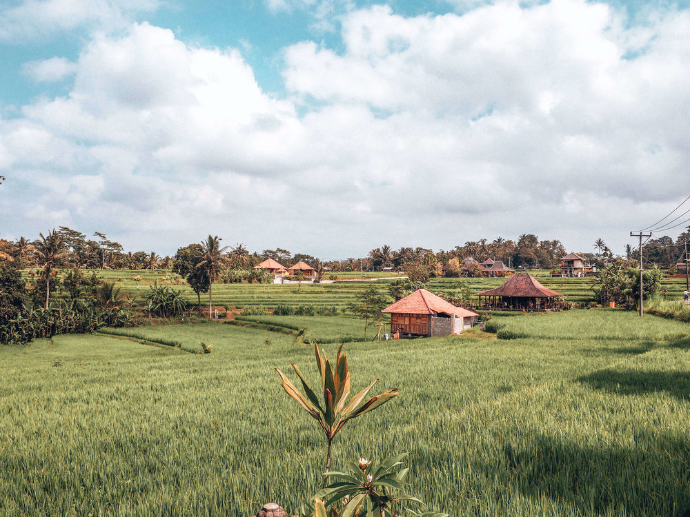 Bali Rice Fields || ouiwegirl.com
