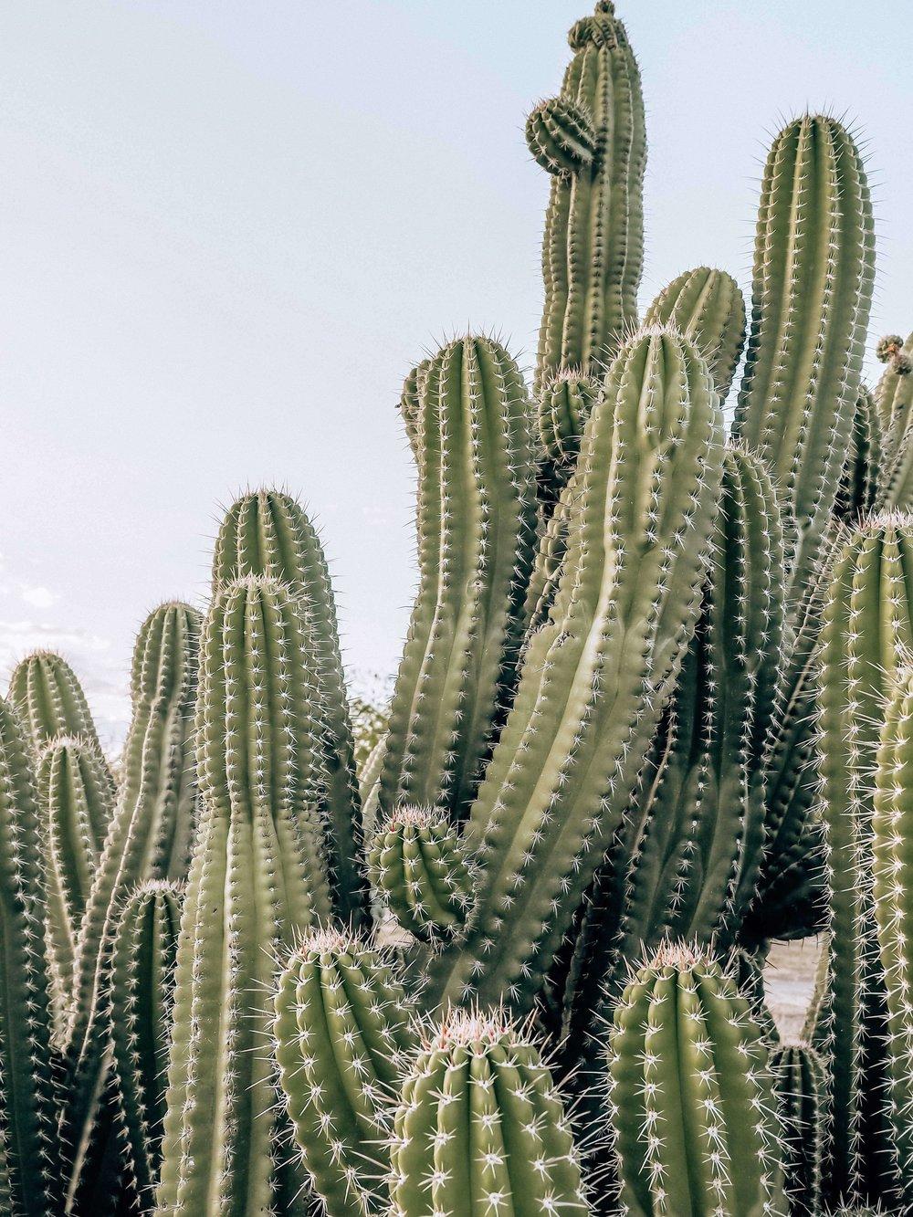 Oaxaca, Cactus, Mezcal Farm, Prints, Plant Magic