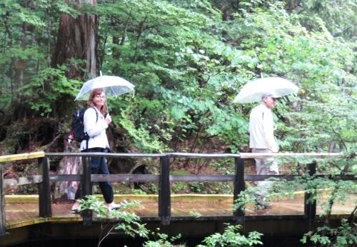 Bernadette suit le guide malgré la pluie !  Forêt d'Agematsu, préfecture de Nagano au Japon, 2015.