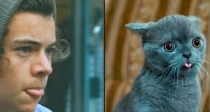 Harry Styles looks like a cat
