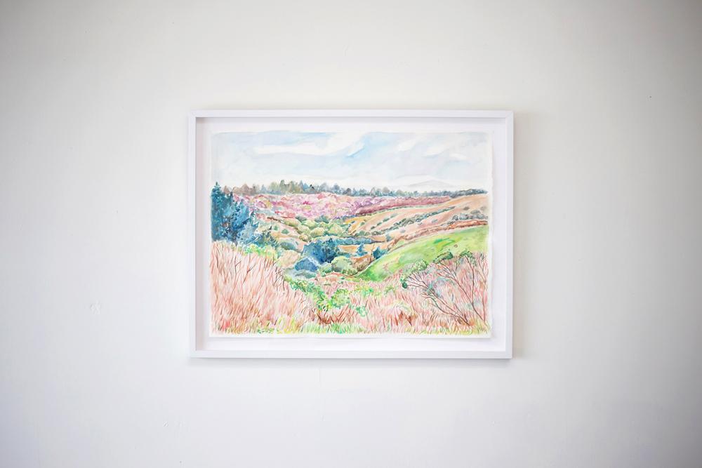 landscape-pinkhills.jpg