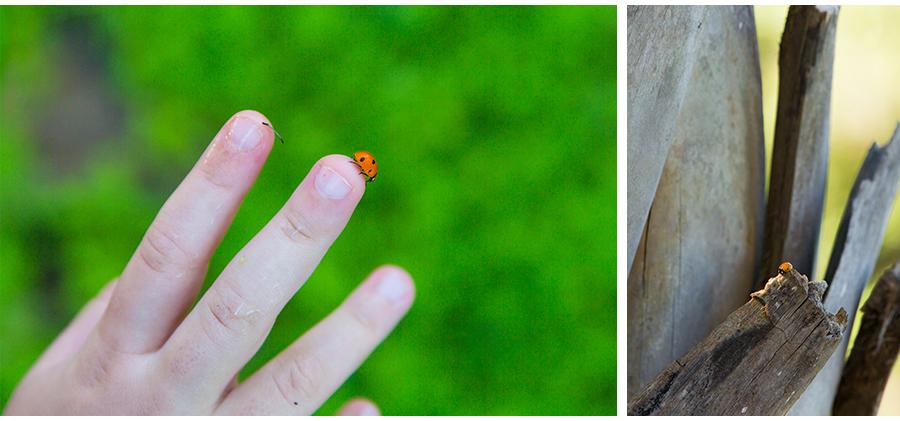 Earth-Day-Lady-Bug.jpg