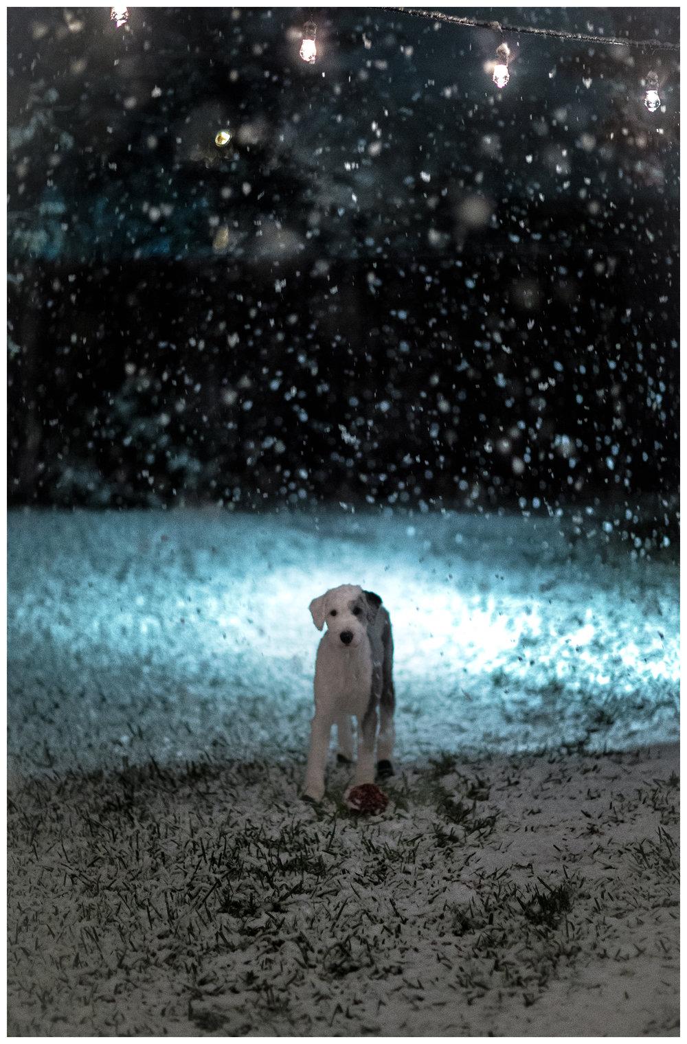 SnowDay2017-Blog-1.jpg