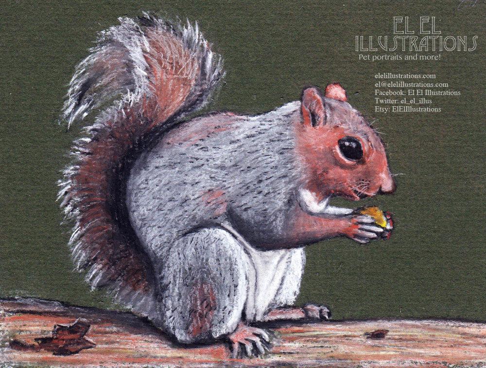 squirrle.jpg