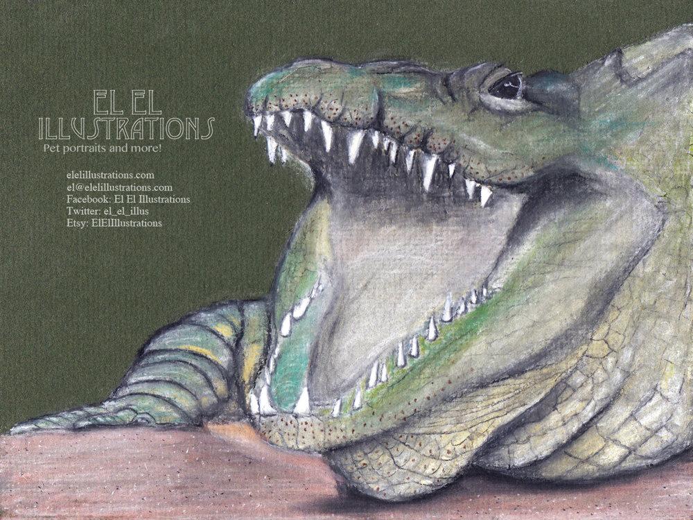 crocodile+.jpg