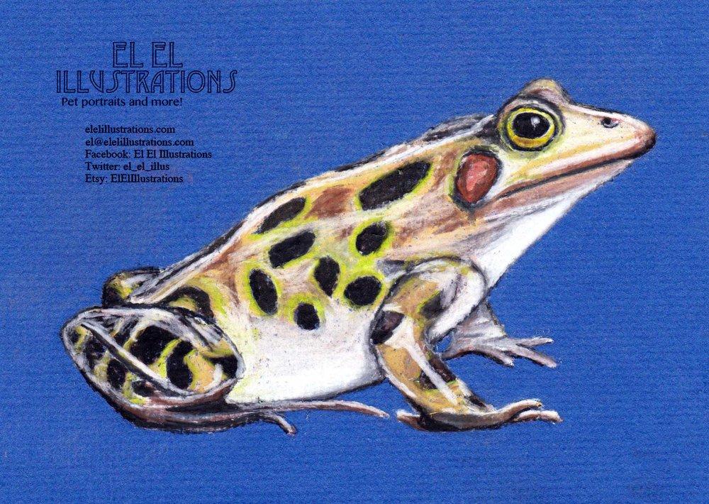 frog_wm.jpg