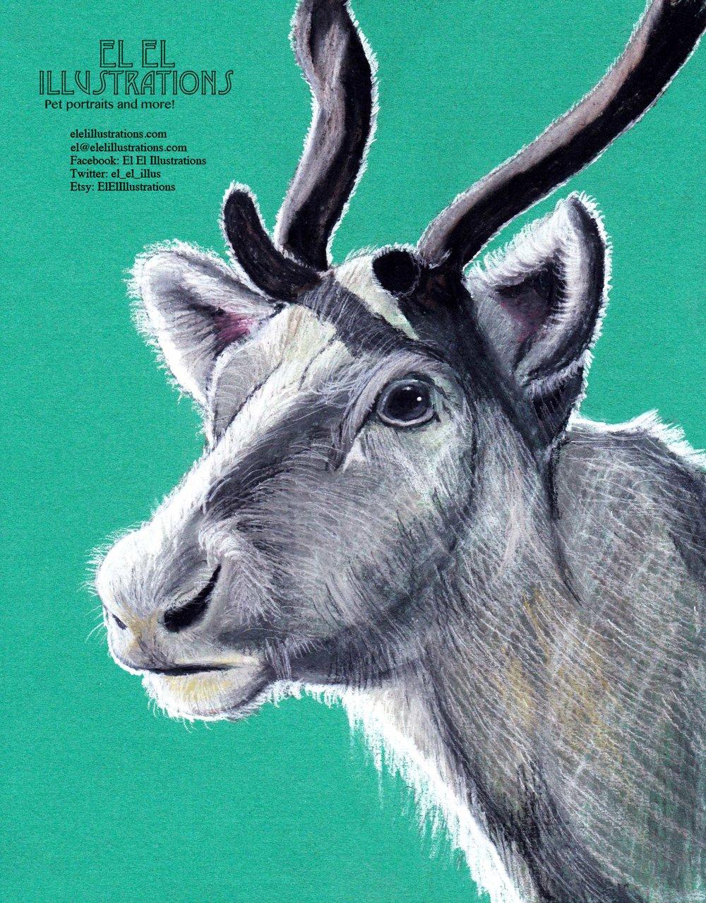 reindeer_wm.jpg