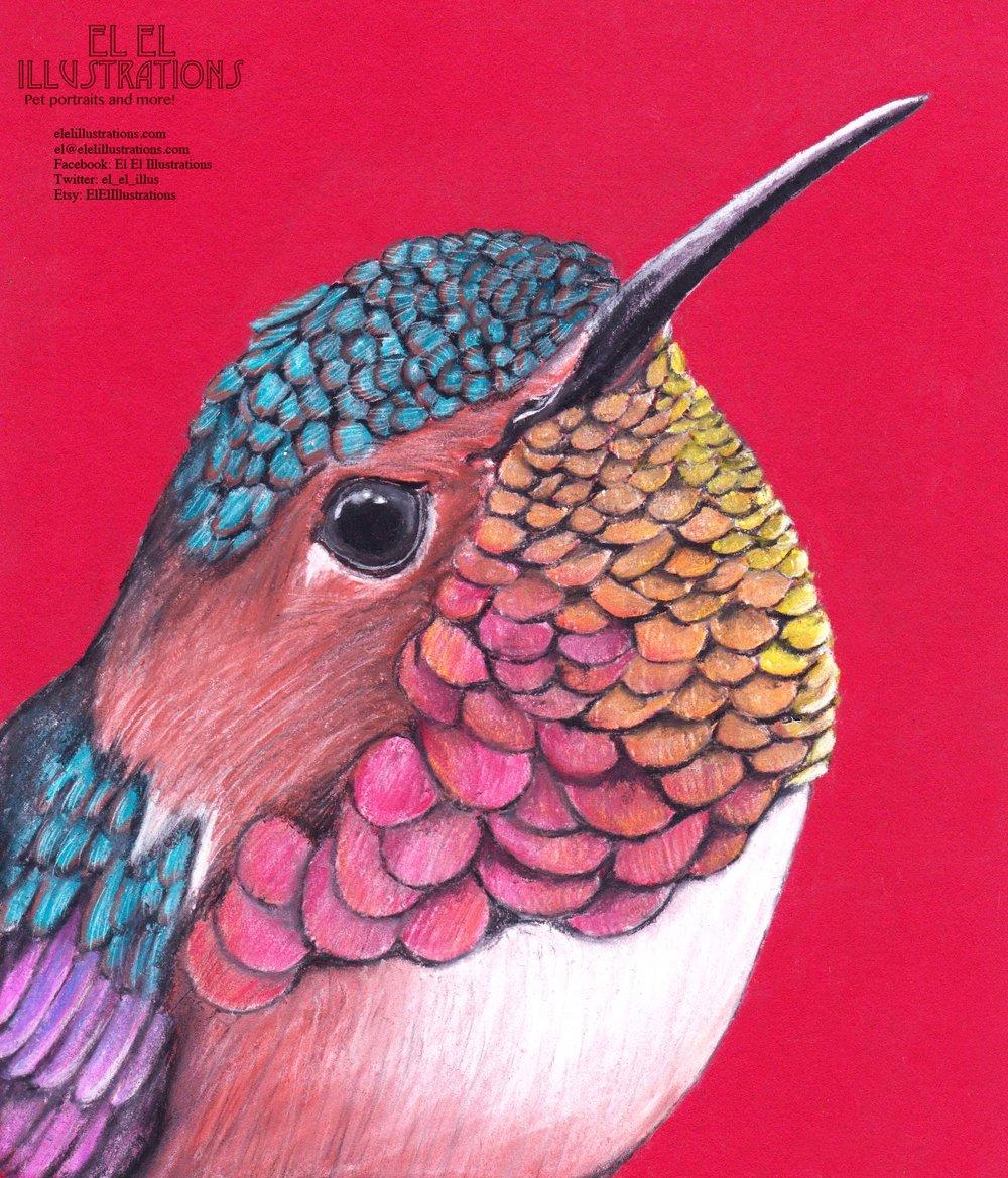 hummingbird_wm.jpg
