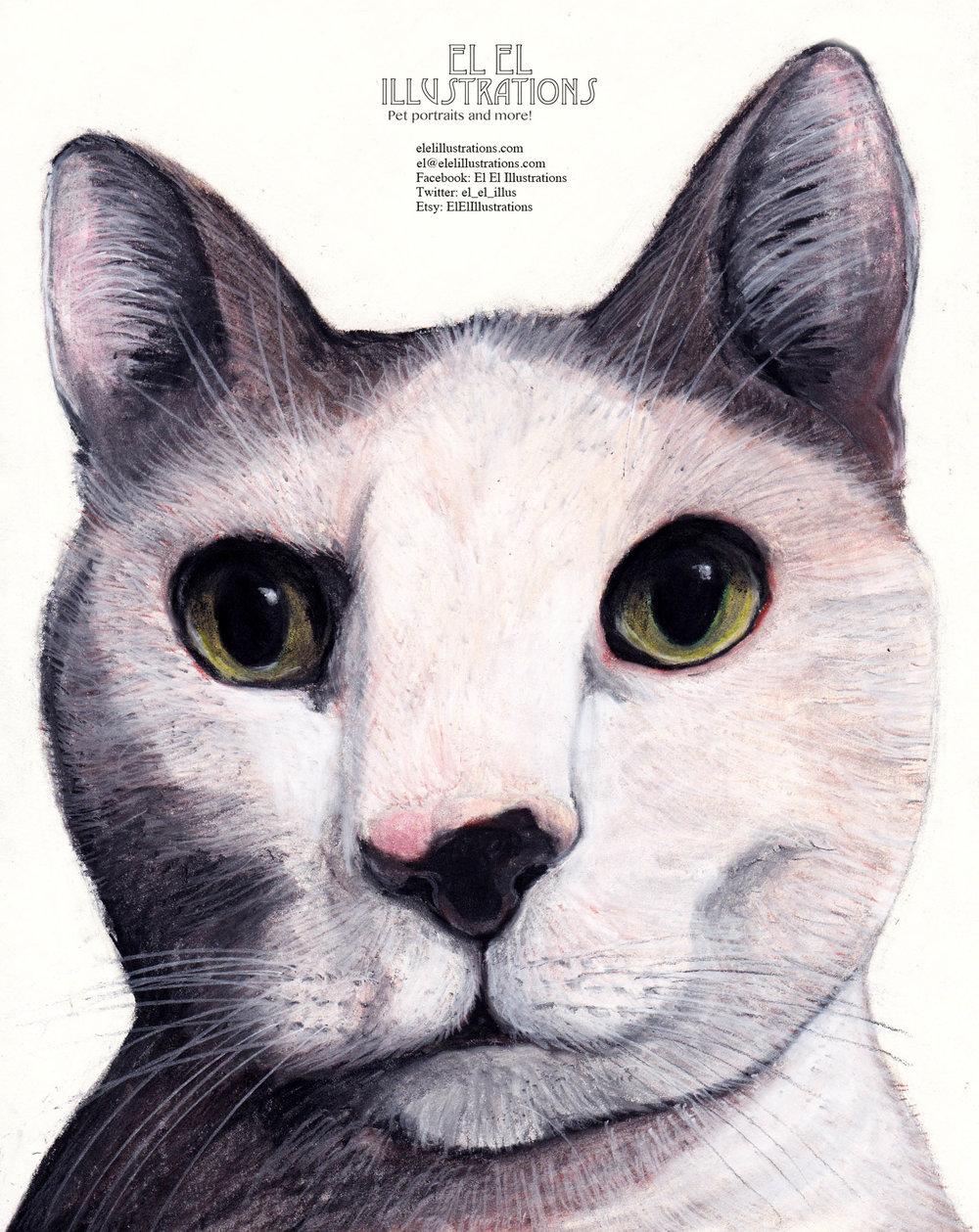 chaz_cat_wm.jpg