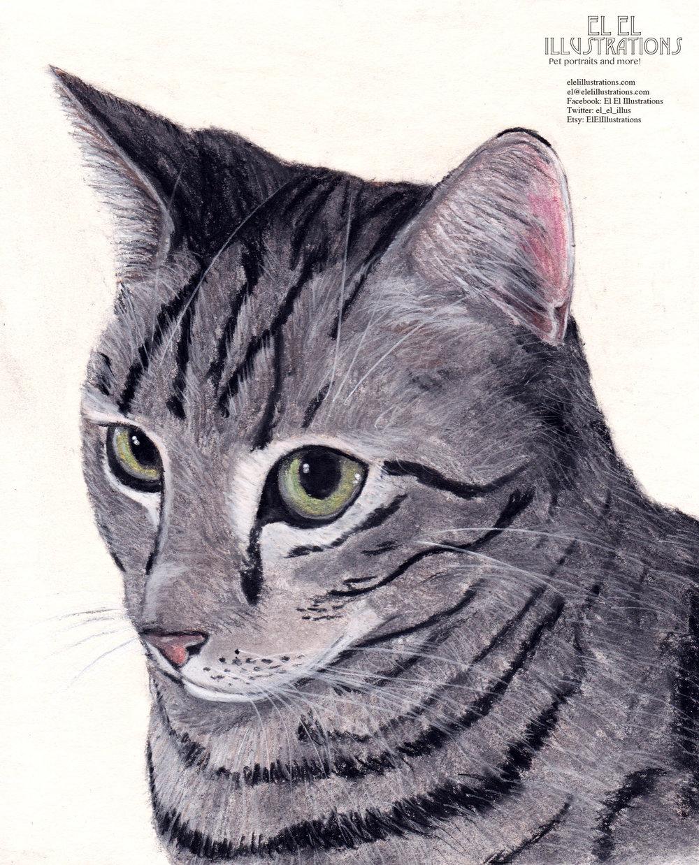noodle_cat_wm.jpg