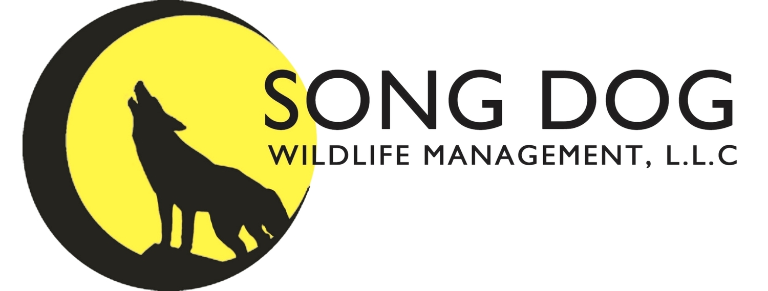 SONG DOG WILDLIFE MANAGEMENT, L.L.C