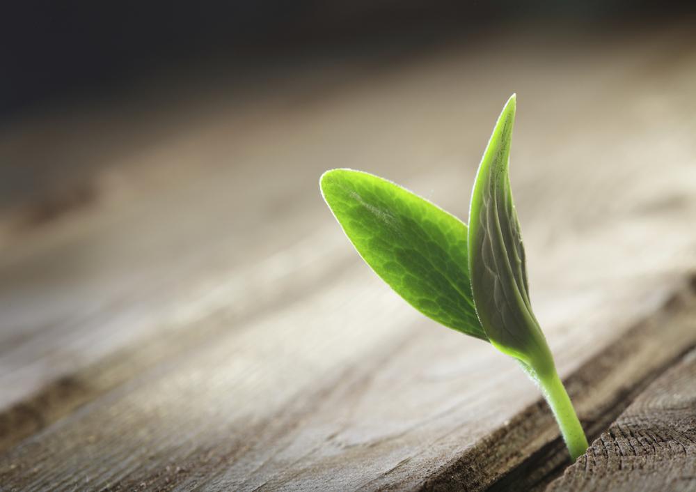 Plant16491164.jpg