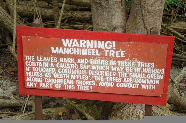 "The Manchineel Tree produces the ""death apple"". Don't eat those little apples you find on the beach in Central America or stand under this tree."