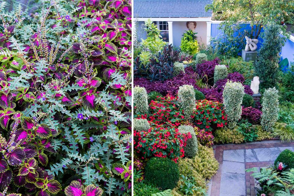 A collection of unique coleus are framed by architectural plantings, which give the space form, structure, and meaning.