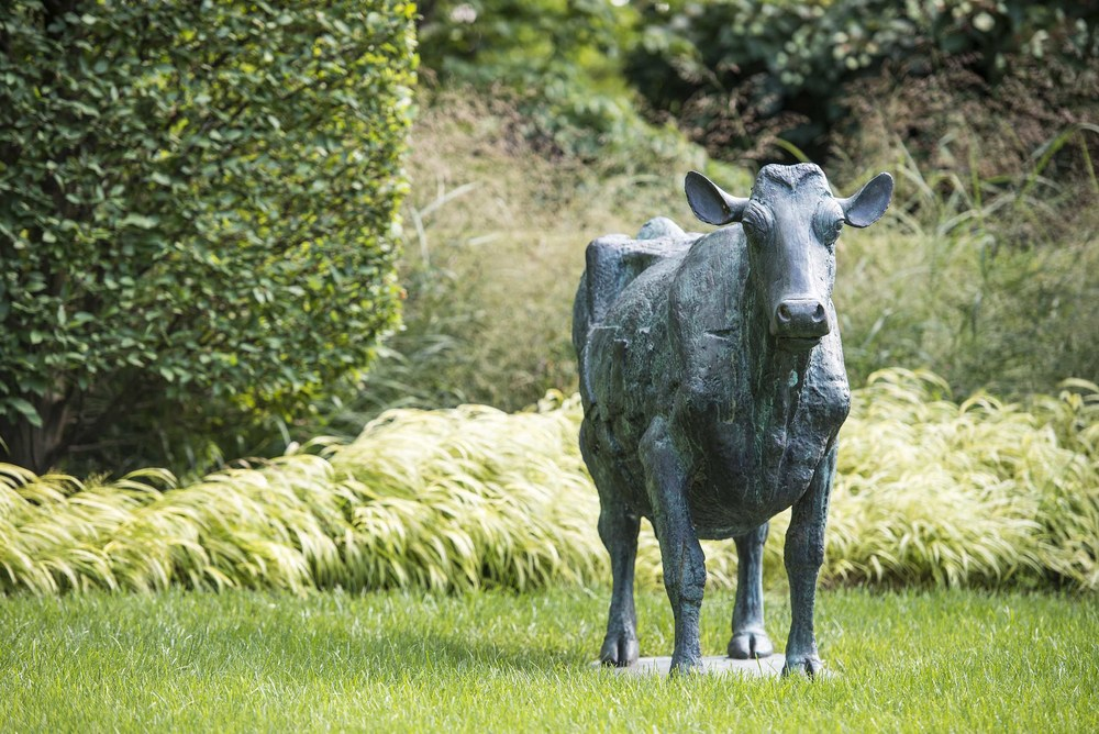 Daisy the Cow at the Mountsier Estate this year. (Photography by Derek Reeves)