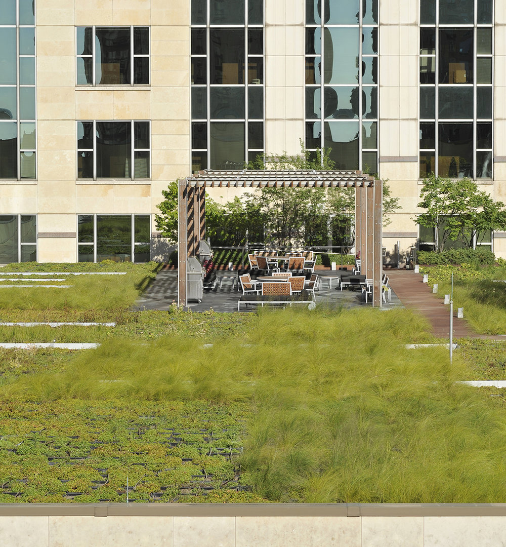 Hoerr Schaudt planted sedum and prairie dropseed in Mondrian-esque configurations for this roof garden in Chicago.