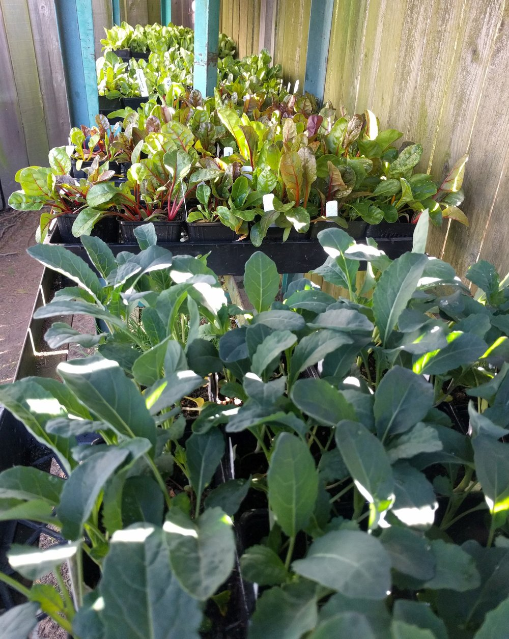 The Seattle Giving Garden Network Is An All Volunteer Run Organization  Which Helps Connect Gardens, Greenhouses, And Gardeners In Order To Grow  And Donate ...