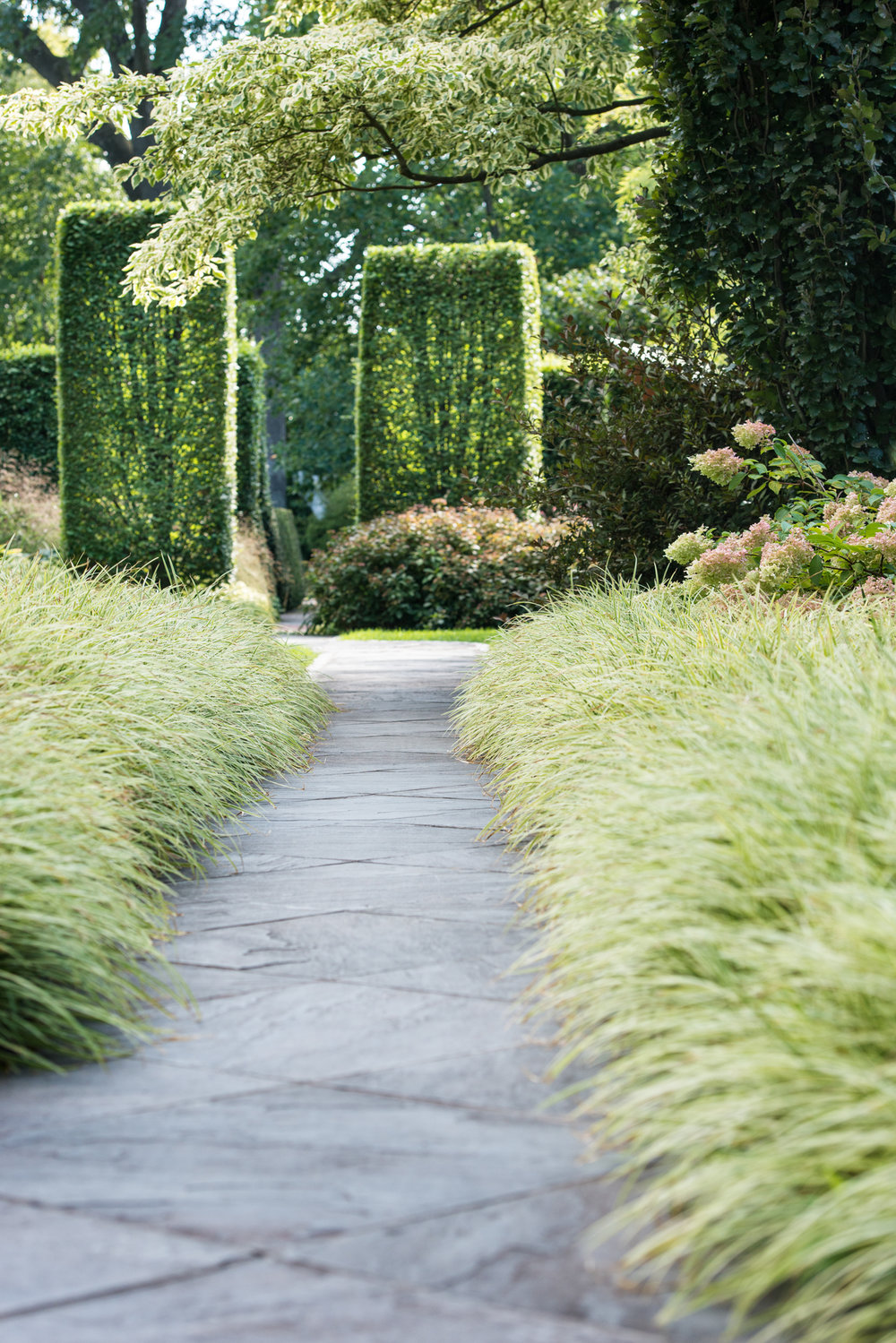 Carex lined, cut flagstone pathway with sheered beech columns