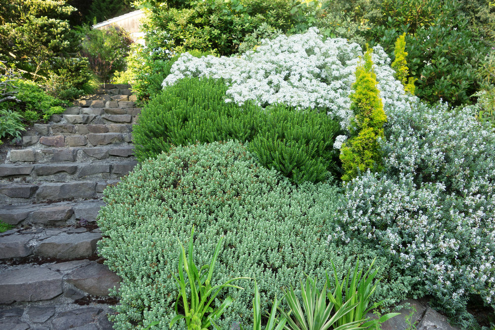 HEBES ALONG STAIRWAY