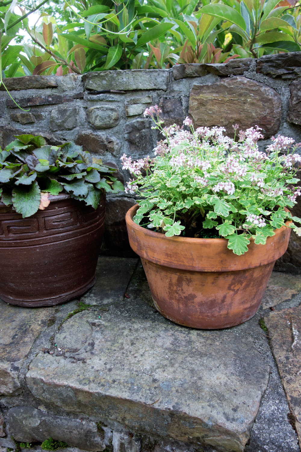 POTTED GERANIUM ON STONE WALL