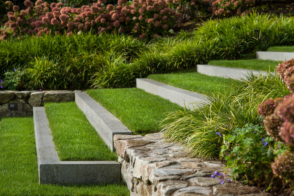 Granite and grass steps with hydrangea paniculata