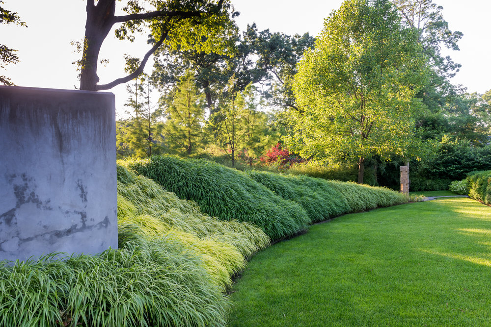 curviliear lawn edged by a massplanting of hakone grasses on bermed planting bed