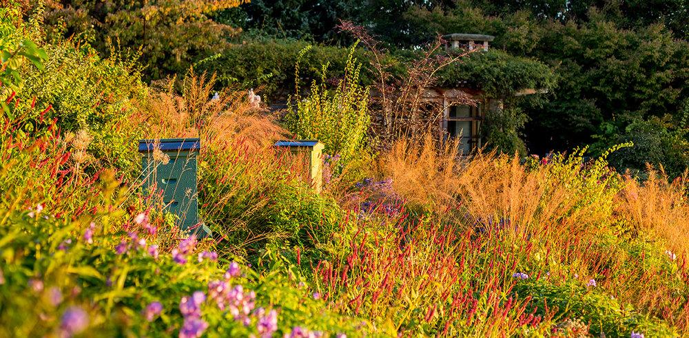 Seattle meadow plants include Phlox, Persicaria amplexicaulis 'Firetail' with Molinia arundinacea 'Skyracer'