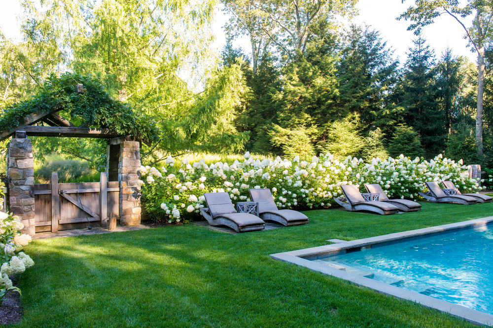 Lounge chairs alining poolside with a backdrop of hydrangea paniculata limelight