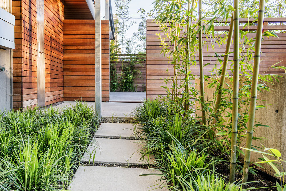 The tall fence and bamboo help to mitigate the scale of the house in this small front entry garden while taking up very little square footage. Smaller grasses and the mystery of space beyond draw the visitor to the front door.
