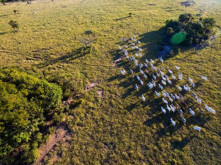 pantanal-by-cesar-oliveira.jpg