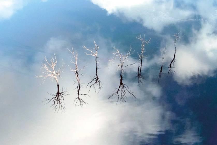 sky-trees-guerledan-lake-by-nicolas-charles.jpg