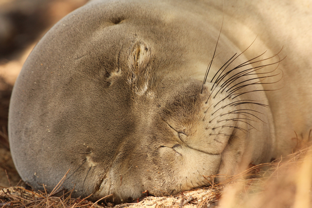 monk seal winning photo.jpg