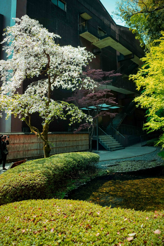 JAPAN_SMLIMG_5629.JPG