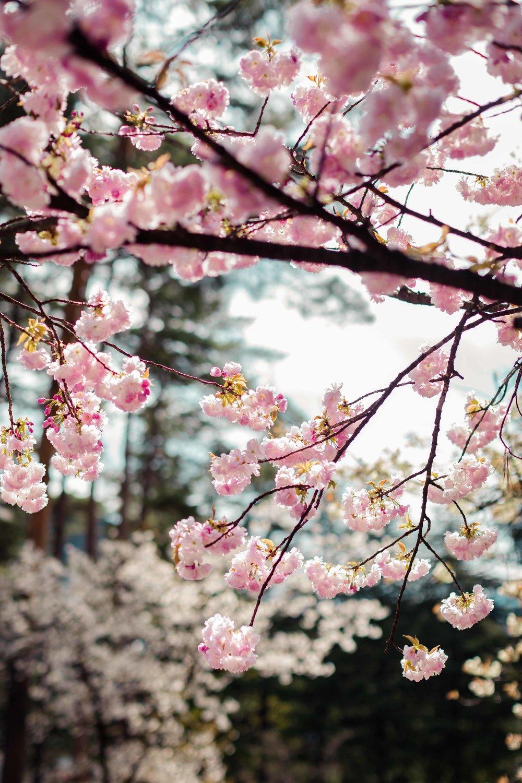 JAPAN_SML_O9A0138.JPG