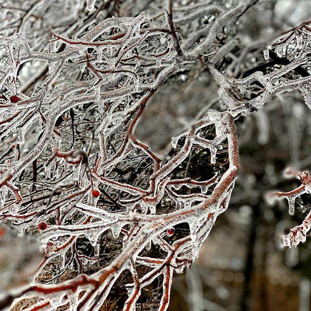 #frozen #nofilter #iphonexsmax #chicago #wgnweather