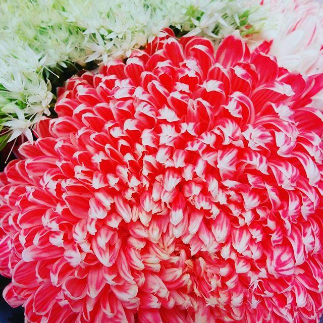 Hello petal  #flowers #hellonature #nature #petals #chrysanthemum
