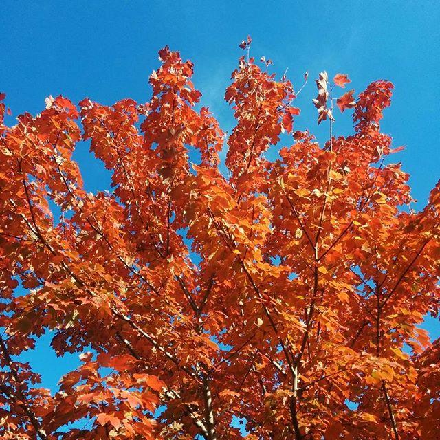 Autumn filter  #hellonature #autumn #leaves #tree #nature