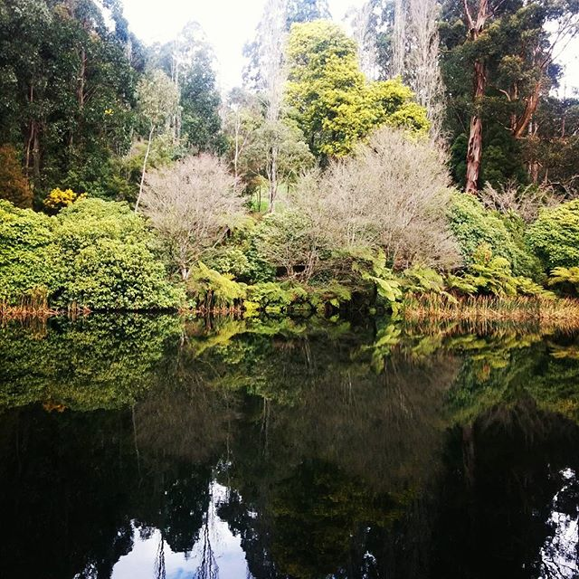 On reflection... #hellonature #nature #rhododendrongarden #victoria #sundayadventures #trees