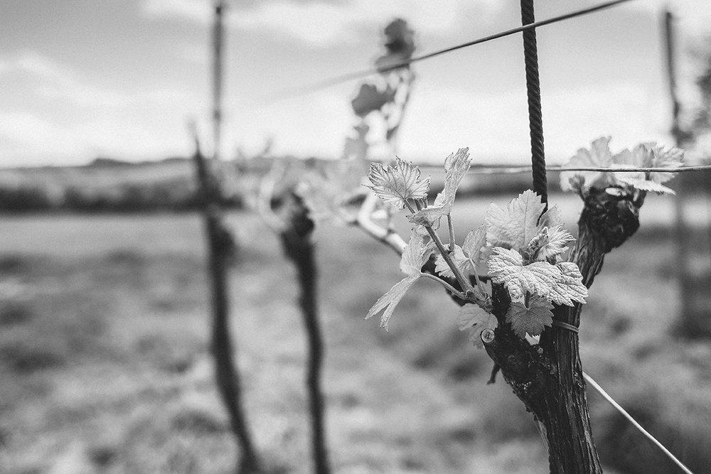 wine-season-picjumbo-com2.jpg