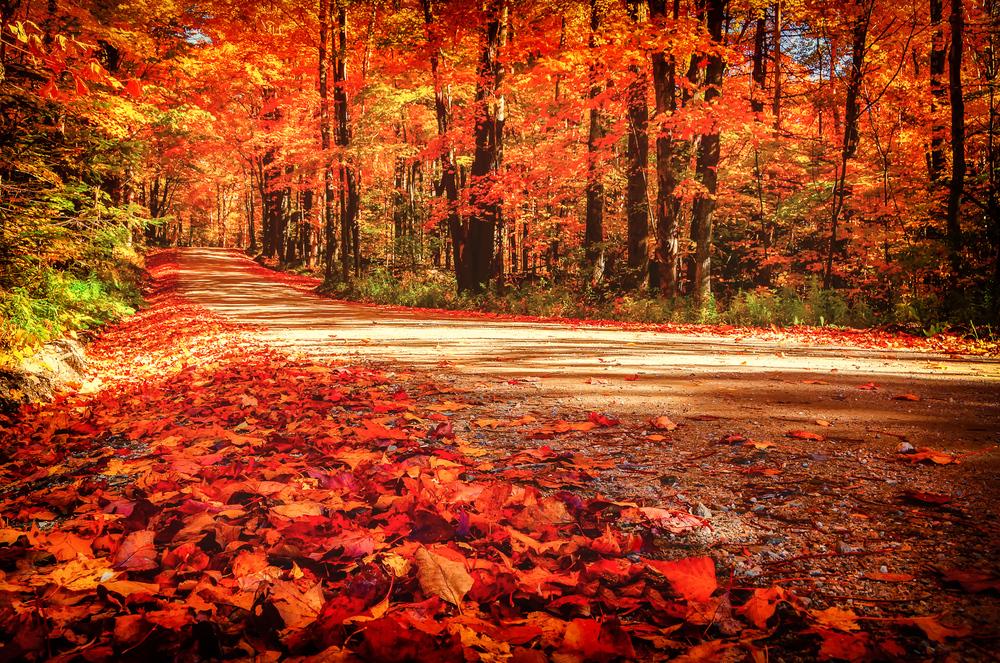 Autumn Road, Killington, VT