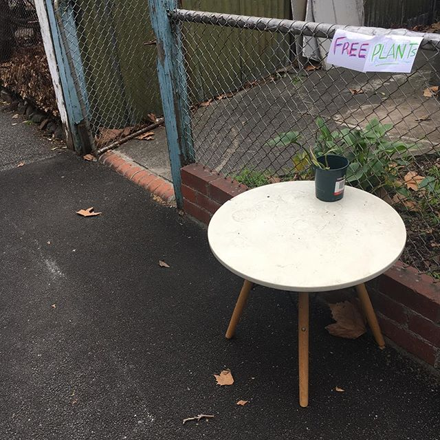 PSA: Free Plant, Gore Street Collingwood